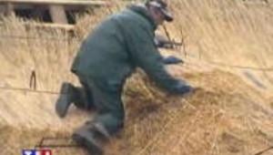 Le seigle de retour sur les toitures de l'habitat rural du Limousin