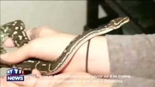 Elle porte plainte contre Fedex pour la perte de son serpent