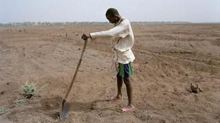 TF1. L'assèchement progressif du lac Tchad, dont la profondeur est passée de 6 m à 1,50 m de moyenne, a contraint ce pêcheur à devenir cultivateur.