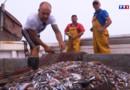 Le 13 heures du 30 juillet 2015 : Travailleurs de la mer 4/5 : le périple du chalutier - 2140