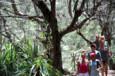 Les Rouges remettent leur totem en jeu puisque c'est eux qui ont remporté la dernière épreuve d'immunité - Koh-Lanta Vietnam