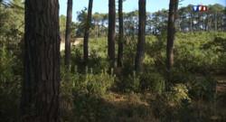 La forêt des Landes/Image d'archives