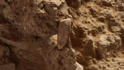 Une dent humaine vieille de 550.000 ans
