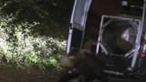L'ours blessé par un chasseur a été localisé