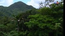 Le 13 heures du 3 août 2014 : La for�humide, richesse verte de la Guadeloupe - 738.7240000000002