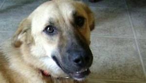 target chien mascotte Afghanistan