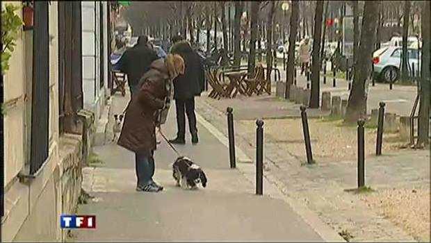 Les brigades chargées de verbaliser les propriétaire de chiens qui font leur besoin sur le trottoir sont habiller en civil pour faciliter les