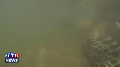 """Soignée, """"Izzy la tortue"""" est remise à la mer en Australie"""