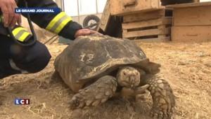 Un incendie ravage une animalerie géante tuant 20.000 reptiles