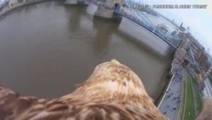Un aigle survole Londres équipé d'une caméra embarquée.
