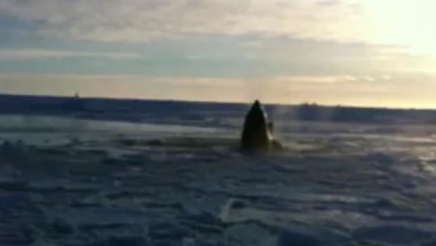 """Une vidéo diffusée sur la télévision canadienne montre des orques respirant chacune leur tour dans un """"trou"""" de glace"""" en train de se refermer."""