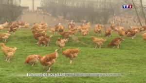 Crise agricole : les éleveurs de volailles résistent à la crise