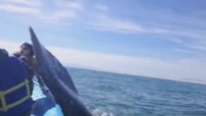 baleinneclaqueok