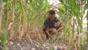 Sécheresse : la Charente s'organise pour vivre avec le moins d'eau possible