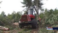 Le 13 heures du 1 octobre 2014 : Semaine pour l%u2019emploi : la fili� du bois recrute dans le Tarn et dans l%u2019Yonne - 1289.3600213012692