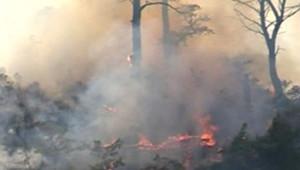TF1/LCI : Incendie dans le massif de la Sainte-Victoire
