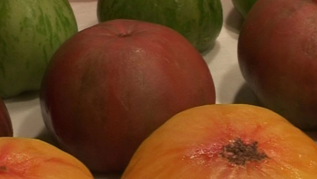 TF1-LCI, tarte tomates