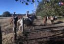 Le 13 heures du 28 avril 2015 : Le Costa Rica, entre taureaux et chevaux - 1916.4089999999999