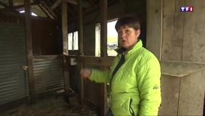 Des vols de chevaux se multiplient dans le Val-de-Loire, colère et inquiétude chez les propriétaires