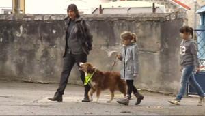 Le 13 heures du 12 novembre 2014 : Un atelier pour apprendre aux enfants �e comporter avec les chiens - 1702.9549130859373