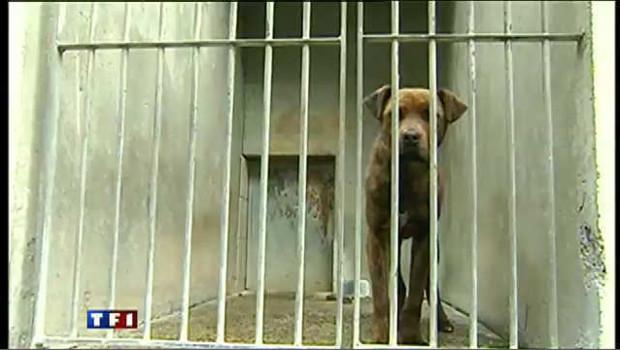 SOS pour 50 chiens de la SPA  de tarbes - 24 chiens DCD / 37 lors du transport organisé par la SPA NATIONALE - Page 2 Abandons-animaux-spa-chiens-3592159odwjt_1713