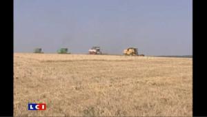Russie: l'embargo sur le blé entre en vigueur
