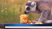Le 20 heures du 4 juillet 2015 : Canicule : et les animaux des zoos, alors ? - 679