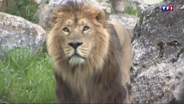 Associer un parc d'attraction et un zoo, un pari relevé avec brio par le PAL, dans l'Allier