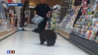 Quand un ourson brun erre dans les rayons d'un magasin