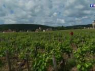 Le 13 heures du 29 mai 2015 : Bourgogne : jusqu'à 20 millions d'euros l'hectare, le prix des vignobles en hausse spéctaculaire - 915