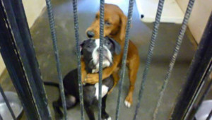 Cette photo a sauvé la vie de ces deux chiens...