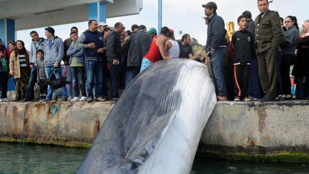 comment pecher les baleines