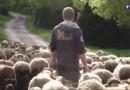 Elevage, nouvelles technologies, commerce : le nouveau visage des agriculteurs 2.0