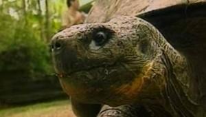 La doyenne des tortues est morte