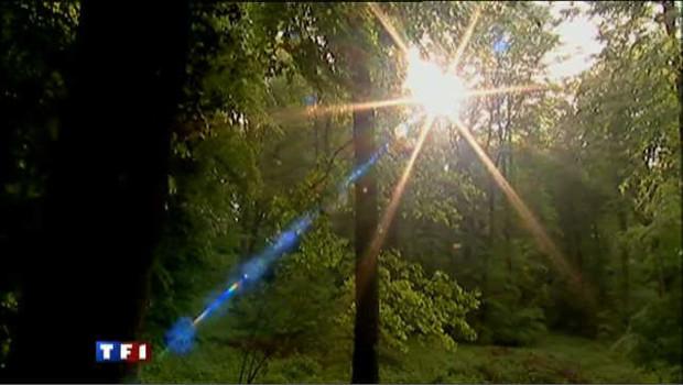 Bois, forêt. Image prétexte.