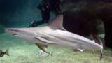 Les requins encore plus meurtriers en 2011