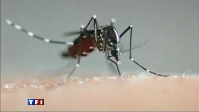 Premier cas autochtone de chikungunya détecté à Fréjus