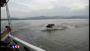 Quand des hippopotames chargent des touristes