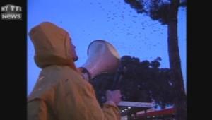 1999, Rome envahie d'oiseaux