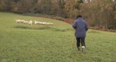 Le 13 heures du 18 décembre 2014 : Ils ont tout quitté pour élever des chèvres angora dans les montagnes du Béarn - 1738.0800704956055