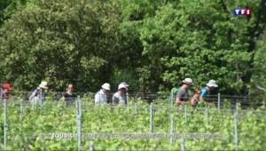Rando-bistro : les randonneurs au cœur des vignes