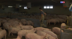 Le 20 heures du 27 août 2015 : Contre la baisse du prix de la viande, les éleveurs allemands se diversifient. - 735