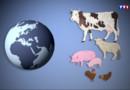 Le 20 heures du 27 août 2015 : La crise du secteur de la viande expliqué par la baisse de la consommation - 872