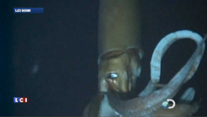 Enfin la vidéo du calamar géant !
