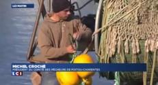 Il n'y a plus assez de coquilles Saint-Jacques en Charente