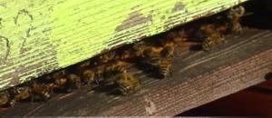 Sécheresse : en Provence, apiculteurs et oléicultureurs font grise mine