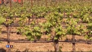 Vin : l'Italie double la France et devient le premier producteur
