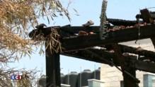 Ado poignardée à Jérusalem : Israël promet d'agir contre les extrémistes juifs