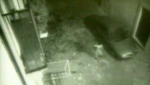 Vidéo surveillance, Aquila le 06 avril 2009