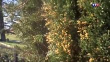 Allergie au pollen : risque très élevé dans quatre départements